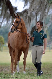 Arabian Horses for Sale in Florida
